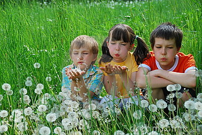 Children in dandelion field