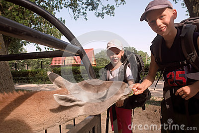 Children feed lama
