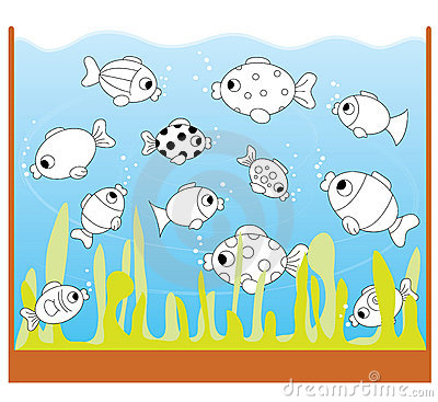 Children game: only two equal fishes