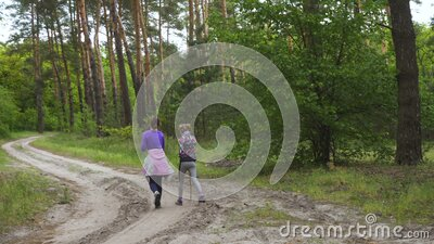 Children girls sisters walking by the pine forest stock video footage