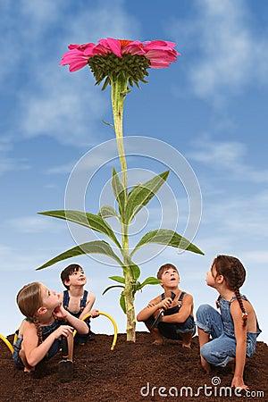 Children Planting a Giant Coneflower