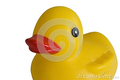 Children s duck toy, white background