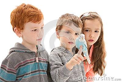 Children with tame pet budgerigar