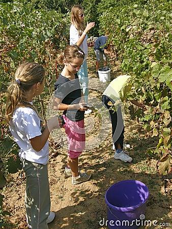 Children work in the vineyard
