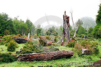 Chile lasu deszcz