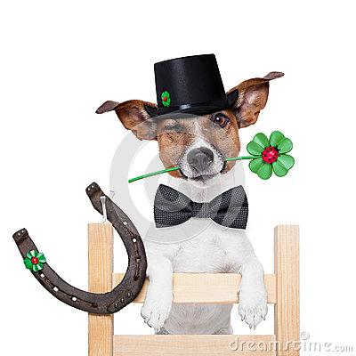 Chimney sweeper dog