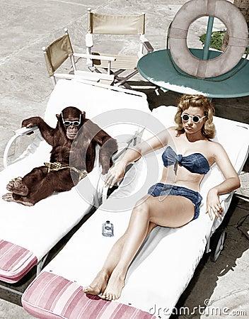 Free Chimpanzee And A Woman Sunbathing Royalty Free Stock Image - 52029136