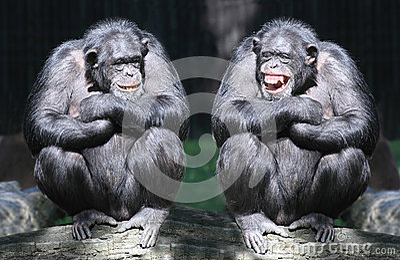 The Chimpanzees.