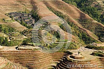 China - rice terraces