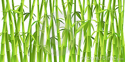 Chinese bamboo trees