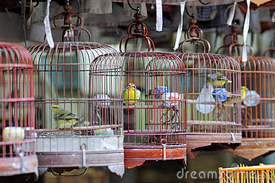 Chinese bird cages and birds