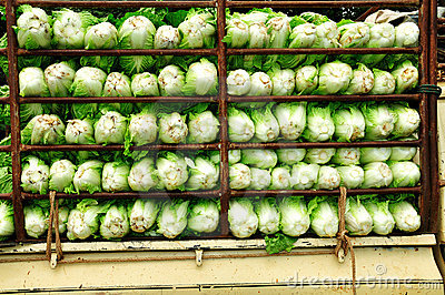 Chinese cabbage on the truck