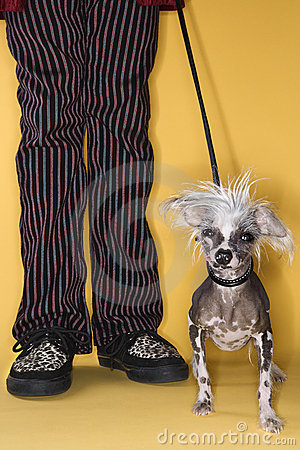 Chinese Crested dog on leash.