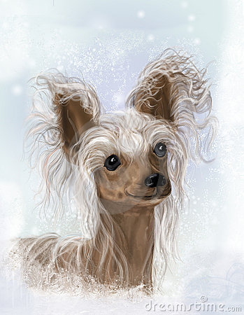 Free Chinese Crested, Hairless Stock Photo - 7032040