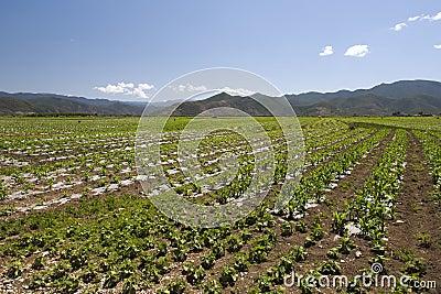 Chinese Farmlands