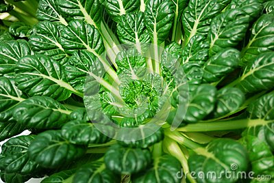 Chinese flat cabbage
