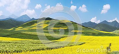 Chinese Landscape,Rape Field