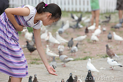 Chinese little girl feeding pigion