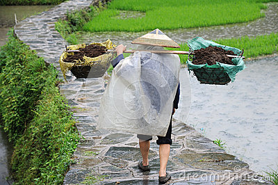 Chinese Miao nationality farmer in the rain Editorial Photo