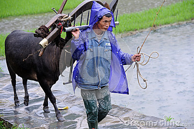 Chinese Miao nationality farmer in the rain Editorial Image