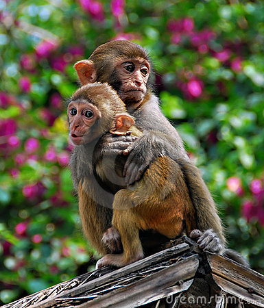 Free Chinese Monkeys Royalty Free Stock Images - 4035669