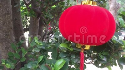 Chinese New Year, lanterns hung from trees stock video footage