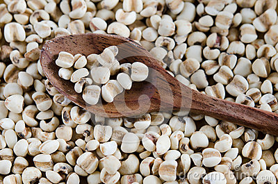 Chinese pearl  barley on spoon