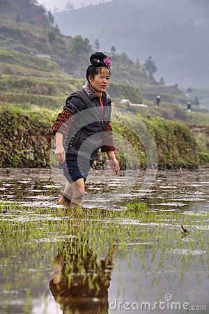 Chinese peasant girl walking barefoot through mud of rice fields Editorial Stock Photo
