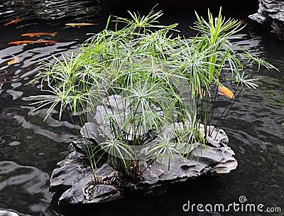 Chinese-style garden pond