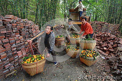 Chinese unload truck of oranges that are in wicker baskets. Editorial Photography