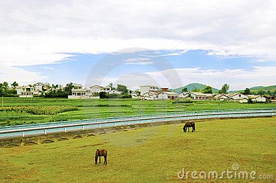 Chinese village,horse