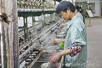 Chinese worker detaching silk cocoons Editorial Stock Image