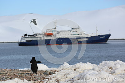 Chinstrap penguin in front of the cruise ship in Antarctica