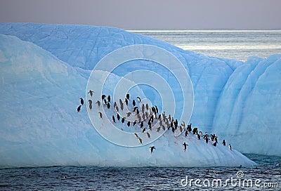 Chinstrap penguins resting on iceberg, Antarctica