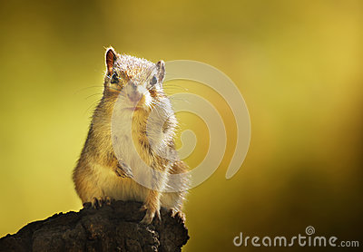 Chipmunk in the autumn woods