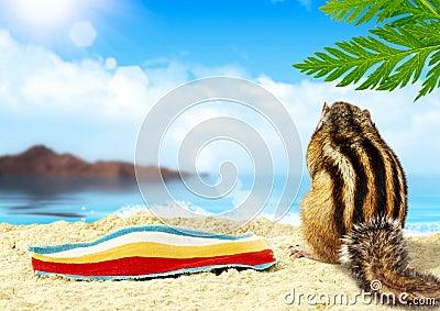 Chipmunk on beach, vacation concept