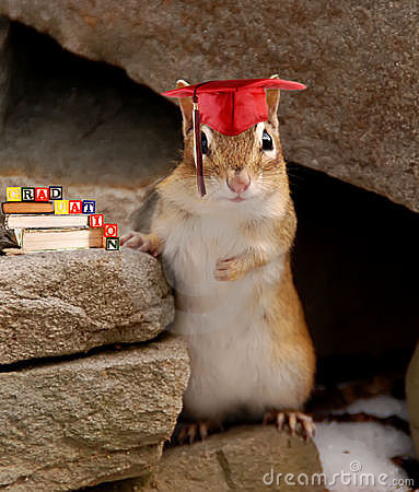 Chipmunk at graduation