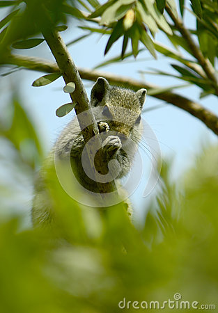 Free Chipmunk Hiding In A Tree! Stock Photo - 61420410