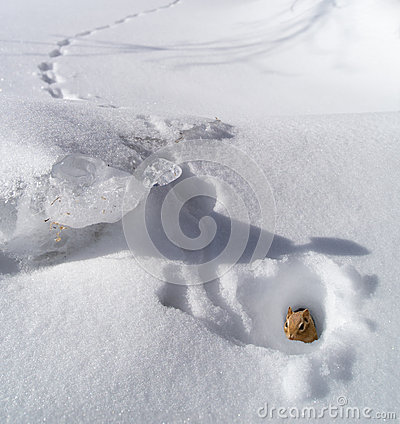 Free Chipmunk In Hole In Winter Stock Photo - 37173630
