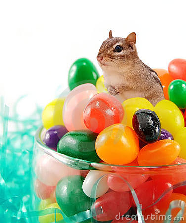 Free Chipmunk In The Jellybeans Royalty Free Stock Photos - 8903898