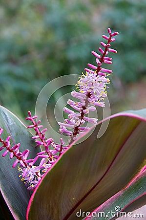 Chiuda su della bromeliacea in fioritura