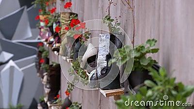 Chiusura della flora che cresce nelle calzature sugli scaffali video d archivio