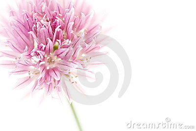 Chives with copyspace