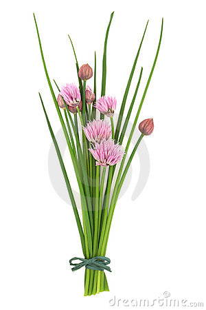 Chives Herb Flower Posy