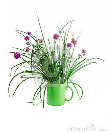 Chives isolated on white