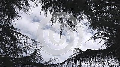 Chmurny zimy włoszczyzny niebo zbiory