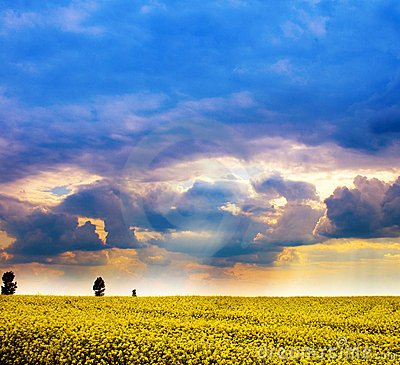 Chmurnych śródpolnych kwiatów krajobrazowy nieba kolor żółty