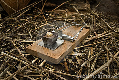 Chocolate Baited Mousetrap