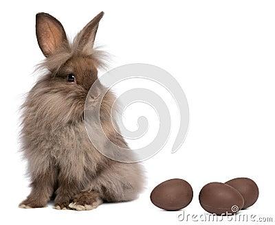 A chocolate lionhead bunny with chocolate eggs