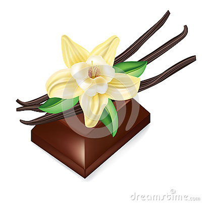 Chocolate piece and vanilla flower isolated